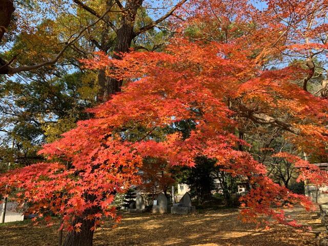 宇都宮神社の紅葉