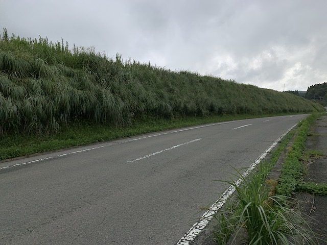 波野の草原
